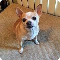 Adopt A Pet :: Max - Troy, MI
