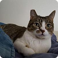 Adopt A Pet :: Jenny - Los Angeles, CA