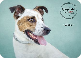 Cattle Dog Mix Dog for adoption in Phoenix, Arizona - Cisco