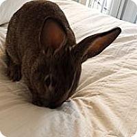 Adopt A Pet :: Leonard - Conshohocken, PA