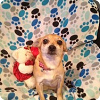 Adopt A Pet :: Beautiful Marilyn - Marlton, NJ