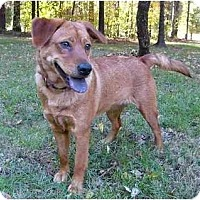 Adopt A Pet :: Ellie - Mocksville, NC