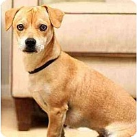 Adopt A Pet :: Tao - Los Angeles, CA