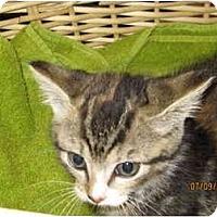 Adopt A Pet :: Snickers - Catasauqua, PA