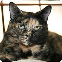 Adopt A Pet :: Tootsie - Bonita Springs, FL