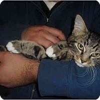 Adopt A Pet :: Lady - Davis, CA