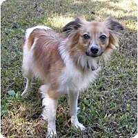 Adopt A Pet :: Pappy - Mocksville, NC