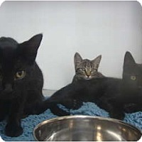 Adopt A Pet :: Camden, Katie & Kit Kat - Winter Haven, FL