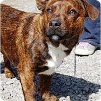 Adopt A Pet :: Sausage - Staunton, VA