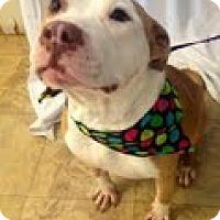 Adopt A Pet :: Caroline - Justin, TX