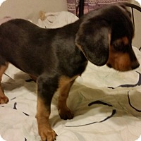 Adopt A Pet :: Jake - Detroit, MI