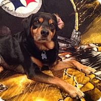 Black and Tan Coonhound/Beagle Mix Dog for adoption in Union City, Tennessee - Brownie