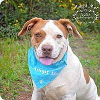 Adopt A Pet :: Miller - Fort Valley, GA