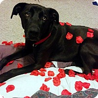 Adopt A Pet :: Shadow - in Maine - kennebunkport, ME