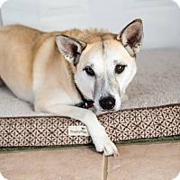 Adopt A Pet :: Zuri - Barnesville, GA