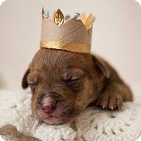 Adopt A Pet :: Tyra Sanchez - Greensboro, NC
