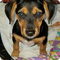 Adopt A Pet :: Skyler - Ft. Lauderdale, FL