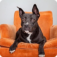 Adopt A Pet :: Jodi - Mission Hills, CA