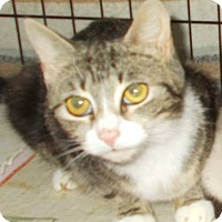 Adopt A Pet :: Bella - New Bedford, MA