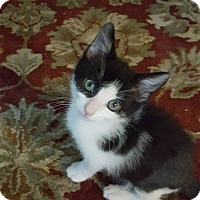 Adopt A Pet :: Flash   Sweet boy! - Berkeley Hts, NJ