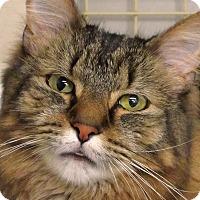 Adopt A Pet :: Darby - Durham, NC