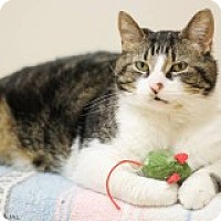 Adopt A Pet :: Camero - McHenry, IL