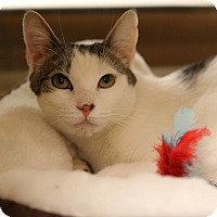 Adopt A Pet :: Chilli Willie - Gainesville, VA