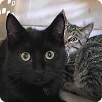 Adopt A Pet :: Grady - Brainardsville, NY