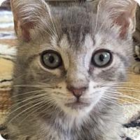 Adopt A Pet :: Ralphie - Philadelphia, PA