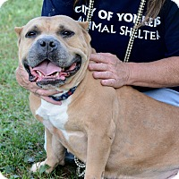 Adopt A Pet :: Sandy - Yonkers, NY