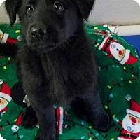 Adopt A Pet :: Laramie - Newport, KY