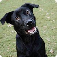 Adopt A Pet :: REGGIE - Tallahassee, FL