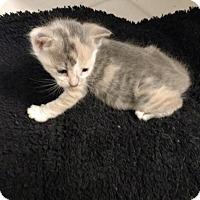 Adopt A Pet :: Lucy (2) - Acworth, GA