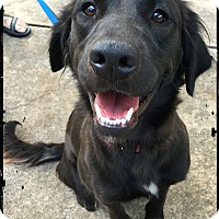 Adopt A Pet :: Salma - Johnson City, TX