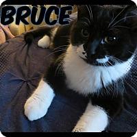 Adopt A Pet :: Bruce - Eagan, MN