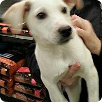 Adopt A Pet :: Lennan - Pompton Lakes, NJ