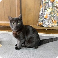 Adopt A Pet :: Blackie - Somerset, KY