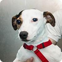 Adopt A Pet :: Gimli - Richmond, VA