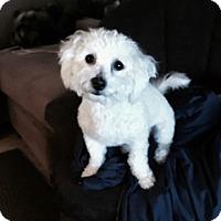 Adopt A Pet :: Chloe - Temecula, CA