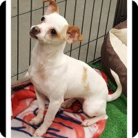 Adopt A Pet :: TILLY - Winchester, CA