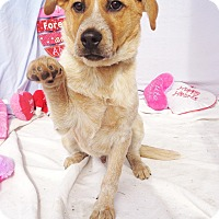 Adopt A Pet :: Muttley - West Chicago, IL