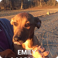 Adopt A Pet :: Emily Lucy - Southington, CT