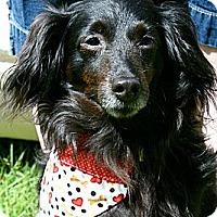 Adopt A Pet :: FRODO - Portland, OR