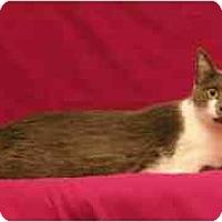 Adopt A Pet :: Gretta - Sacramento, CA