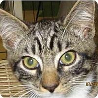 Adopt A Pet :: Bob - Catasauqua, PA