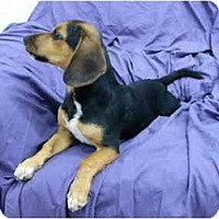 Adopt A Pet :: Snoop - Mocksville, NC