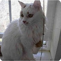 Adopt A Pet :: Vanna - Davis, CA
