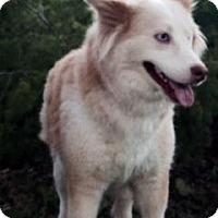 Adopt A Pet :: Paloma - Houston, TX