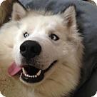 Adopt A Pet :: Kenai