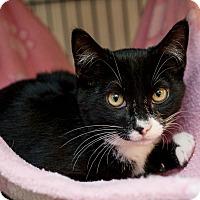 Adopt A Pet :: Silvy - Shelton, WA